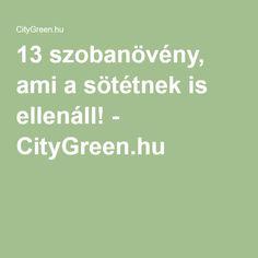 13 szobanövény, ami a sötétnek is ellenáll! - CityGreen.hu