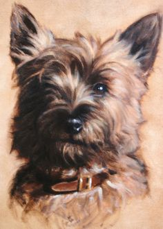 Dogs in Art at the StockBridge Gallery - Cairn Terrier Painting by Hazel Morgan. Cairn Terriers, Terrier Dogs, Cairns, Dog Artist, Yorkshire Terrier Dog, Dog Portraits, Portrait Paintings, Animal Paintings, Illustrations