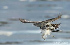 HBW World Bird Photo Contest - Second Edition | HBW Alive