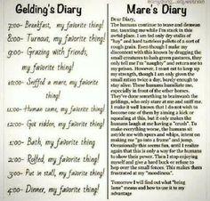 Mares diary vs gelding diary