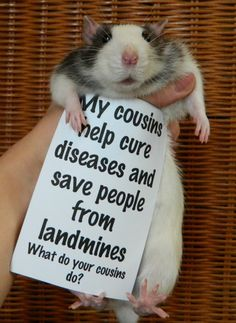An Adorable Campaign For Rats AsPets