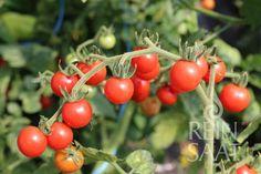 Fruit, Vegetables, Vegetable Recipes, Veggies