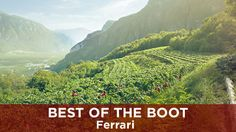 Looking for a high-quality champagne alternative? Learn about the superlative sparkling Italian wines from Ferrari with Matteo Lunelli in this video.