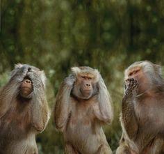 "Three wise monkeys 三匹の猿 embody the proverbial principle to ""see no evil, hear no evil, speak no evil"" Mizaru, Kikazaru and Iwazaru (見ざる, 聞かざる, 言わざる) 非禮勿視, 非禮勿聽, 非禮勿言, 非禮勿動"