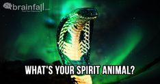 My spirit animal is the Snake. Take this quiz to find out yours! Find My Spirit Animal, Whats Your Spirit Animal, What Animal Are You, My Animal, Sprit Animal Quiz, Cute Kawaii Animals, Adorable Animals, Black Panther Art, Spiritual Transformation