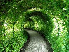 I would love to plant a tunnel of green.  Get some of those cattle panels at Tractor Supply... bend them over, and plant lots of different vine varieties for color throughout the year. Make certain to include evergreens, so you will have winter green, too.