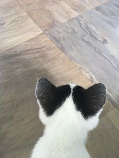 Excellent pretty cats info are readily available on our internet site. Cats Diy, Cute Cats And Kittens, I Love Cats, Crazy Cats, Cool Cats, Kittens Cutest, Cute Funny Animals, Cute Baby Animals, Animals And Pets