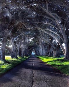 Cypress Tree Tunnel in Point Reyes National Seashore, California Cypress Tree Tunnel, Cypress Trees, Places Around The World, Travel Around The World, Around The Worlds, Nature Photography, Travel Photography, Future Photos, Unique Trees