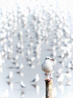 "mistymorningme: "" gathering of the sea gulls by arthika """