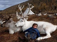 Ребенок спит на олене, Якутия