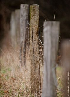 Rustic fence . . .