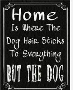 Home Where The Dog 9 - Funny Dog Quotes - Home Where The Dog 9 x 12 Metal Parking Sign The post Home Where The Dog 9 appeared first on Gag Dad. Dog Quotes Funny, Funny Dogs, Funny Animals, Funny Memes, Funny Dog Signs, Diy Funny, Sweet Dog Quotes, Boxer Quotes, Chihuahua Quotes