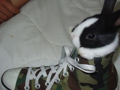 Not the bunny... But I neeeeed these shoes!
