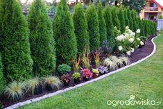Ogrodowa przygoda Łukasza :) - strona 327 - Forum ogrodnicze - Ogrodowisko