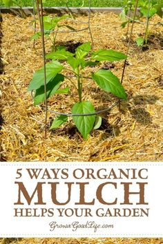 35cc963d9836dc62d72cb2e0b750882a - How To Prepare Georgia Soil For Gardening