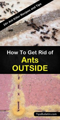 Ants might seem harmless, but these pests not only ruin picnics they can invade your home. Learn how to get rid of ants outside using DIY pest control recipes with boric acid, sugar, and essential oils. Ant Killer Recipe, Homemade Ant Killer, Boric Acid Ants, Borax For Ants, Ants In Garden, Garden Insects, Garden Pests, Home Remedies For Ants, Ant Spray