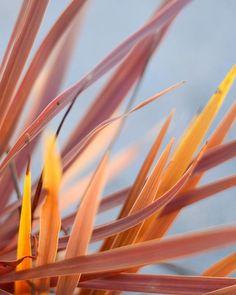 Featuring autumnal #villalenaflora #villalena #comeandstaywithus Photo @niklasvindelev