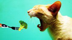 Öncelikle biz veganlar olarak evlerimizde, bahçelerimizde ve sokaklarda beslenmesini üstlendiğimiz kedi ve köpek dostlarımızın sağlıklı yaşamalarını, fakat diğer hayvan dostlarımızın bedenlerinden parçalar içeren yiyecekler vermek zorunda kalmamayı istiyoruz.   https://www.change.org/p/migros-turkiye-kedi-ve-k%C3%B6pekler-i%C3%A7in-vegan-mama-se%C3%A7ene%C4%9Fi-istiyoruz