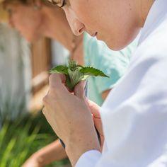 Fragrant herbs workshop