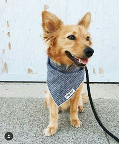 Love the dog and the bandana!