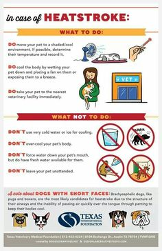 5 Important Summer Safety Tips for Pets Happy Animals, Animals And Pets, Heat Stroke In Dogs, Summer Safety Tips, Pet Health, Health Care, Summer Dog, Summer Heat, Dog Care Tips