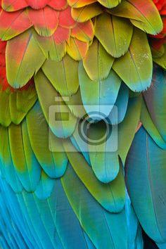 Fototapeta ubarwione ara - dziki - zwierzę • PIXERS.pl