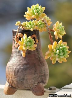 Useful information about how to propagate succulents from leaves and cuttings. This guide will help you to propagate succulents properly. Succulent Bonsai, Terrarium Plants, Succulent Gardening, Planting Succulents, Planting Flowers, Cactus Planta, Cactus Y Suculentas, Colorful Succulents, Succulents In Containers