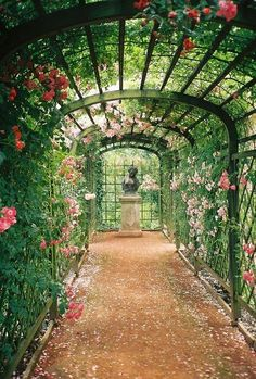 ~rose arch over path~