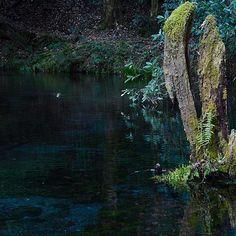 【mi.ka0728.blanc】さんのInstagramをピンしています。 《******** ・ 誰もいない朝... こんこんと湧くその美しい水は... ・ 阿蘇の大地を通り... 長い旅にでる。 ・ ・ 透明度が高くて、鏡のようなこの場所に... ずっと行ってみたかった。 ・ ・ location  熊本  山吹水源 (名水百選) ・ トロンとした舌触り、 森の味がしましたょ...。 ************ #bestjapanpics #熊本 #山吹水源 #名水百選 #阿蘇 #池 #igersjp #cools_japan #ig_japan_ #icu_japan  #japan_daytime_view  #japan_of_insta #phos_japan #水 #景色 #けしからん風景 #RECO_ig  #team_jp_ #wp_japan #wu_japan  #whim_life  #キタムラ写真投稿 #森 #日本 #as_archive  #s_shot #mono_best15 #bestphoto_japan #bns_ig #wp_pics》