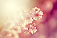 Pink wallpaper by *EliseEnchanted on deviantART