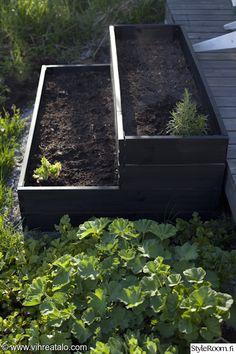 puutarha,piha,istutukset,kasvilaatikko