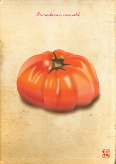 pomodori a cancedd, ortaggi, illustrazione, arte digitale - a cancedd tomatoes, vegetables, illustration, digital art