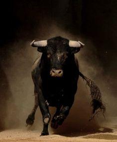 Draper, Elle - Charging Bull