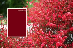 Glidden Fall Paint Colors Red Delicious Front Door Maybe