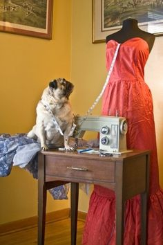 Fashion Design | The 21 Most Useless College Majors For Pugs, From Fashion Design To Boat Operating