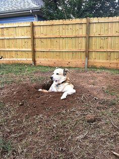 イヌが突然、自身の体が入ってしまうほど穴を掘りつづけた。結果、穴に入ってくつろぎ始め、そのリラックスぶりが話題に。