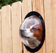 Mirador para perro .