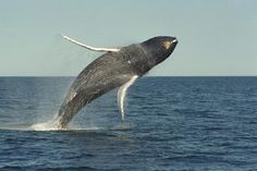 Summer months are the best time to spot whales in Maine.