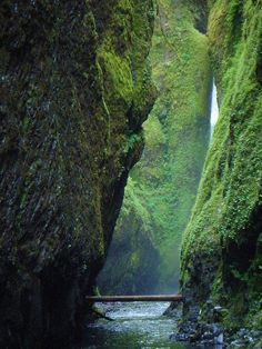 Log Bridge, Oneonta Gorge, Oregon