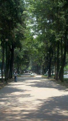 Polanco sidewalk,  Mexico City