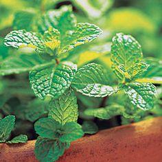 21 best crops for your edible garden | Mint | Sunset.com