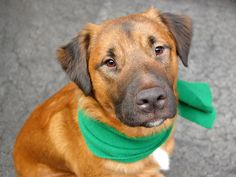 TO BE DESTROYED - 05/15/14 Manhattan Center   GRACE - A0998232   MALE, BROWN, GERM SHEPHERD MIX, 2 yrs, 1 mo SEIZED - ONHOLDHERE, HOLD FOR EVICTION Reason OWN EVICT  Intake condition NURSING Intake Date 04/30/2014, From NY 10456, DueOut Date 05/07/2014, I came in with Group/Litter #K14-175652. https://www.facebook.com/photo.php?fbid=797423270270554&set=a.617938651552351.1073741868.152876678058553&type=3&theater