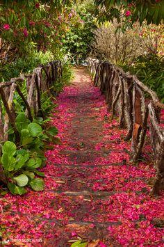 Trail in Queimadas, Santana, Madeira Island - Portugal #PortugalFlowerPower