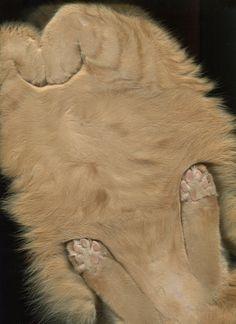 The Cat Scan-Got a cat?  Got a Scanner?