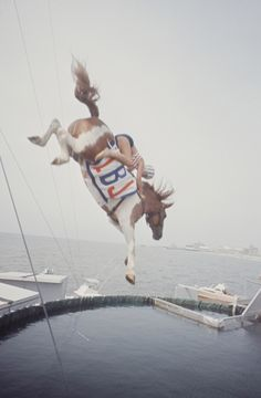 diving horse. that is actually really cool.