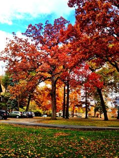 Autumn in Ann Arbor, MI
