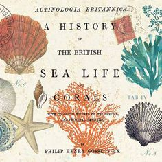 British Sea Life & Corals Beverage Napkins | Drink | Cocktail Party Decorations