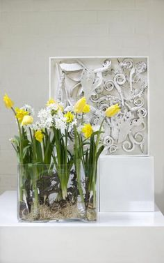 www.vmvj.fr - Tulipa, Narcissus