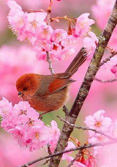 Redbird pink blossoms