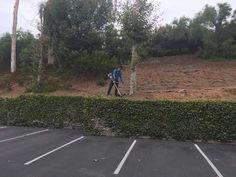 Gardening Services, Santa Barbara, Lawn And Garden, Gardening, Horticulture